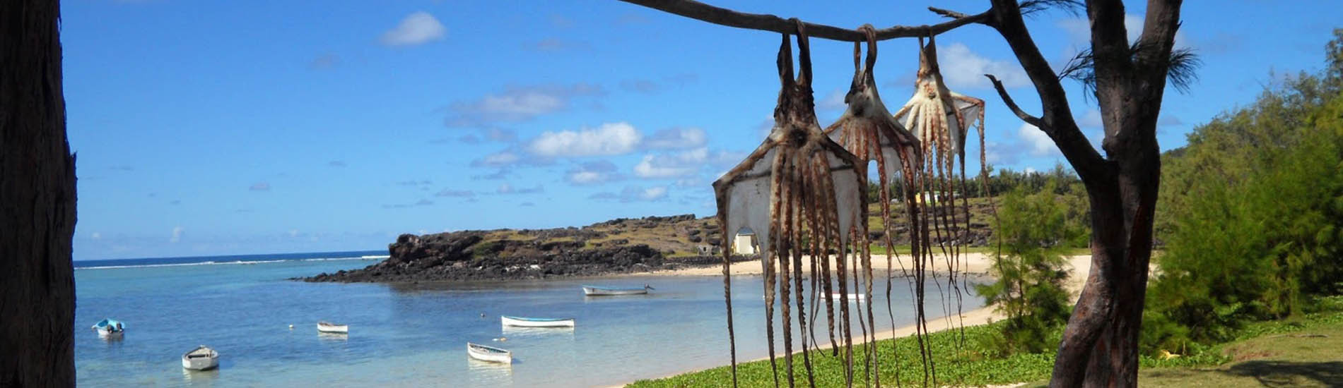octopus-drying-rodrigues-island